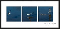 Fishing Triptych (Alexandre Ponsin) Tags: bestof framed selection 2007 bestof2007 alexandreponsin