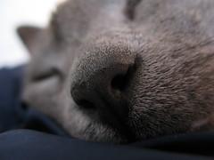 Columbo's nose