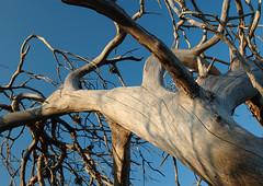 Chypre (Thierry B) Tags: world voyage travel trees geotagged photography photo reisen europa europe dr middleeast cyprus arbres geotag cy  kibris zypern geolocation europen kypros photographies  chypre chipre  europedelouest kipr   westeurope  vegetal   thierrybeauvir beauvir wwwbeauvircom droitsrservs