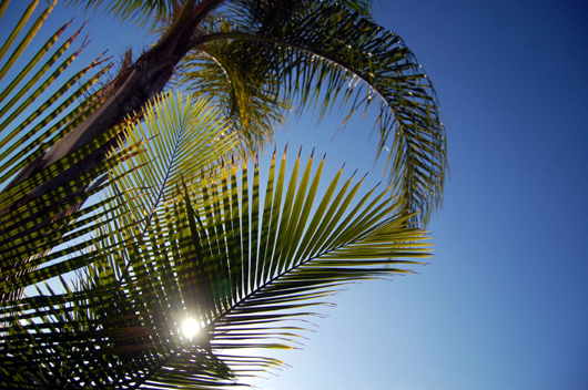 sunshinepalm
