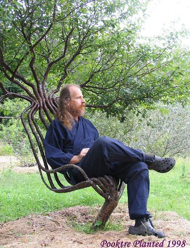 live tree chair