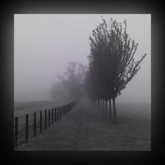 In the misty,morning fog (kenny barker) Tags: trees mist monochrome lines fog landscape scotland panasonic g1 concordians redmatrix sbfmasterpiece cedruseternum sbfgrandmaster