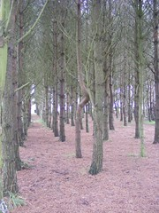 trees (zenitpetersburg) Tags: wood uk trees forest hundred pooh 100 winnie acre ashdown