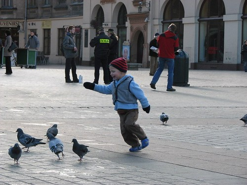 krakow pigeons (15)