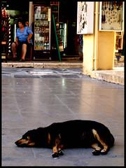 one more nap (matteoprez) Tags: street woman dog colour four nap colore olympus greece human matteo corfu kerkyra 43 thirds quattro terzi prezioso esystem e410 matteoprezioso