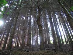 The Charmed Wood (moniketta) Tags: wood sunset flower nature walking flora natura fiori paesaggi panorami passeggiare the4elements