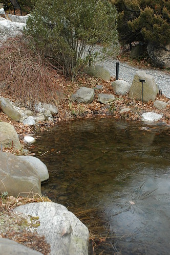 Partially frozen pond, Rock Garden, BBG