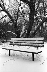 Bench & Tree (Peter_Cameron) Tags: tmax400 nikonf3 id1111 nikon3525e