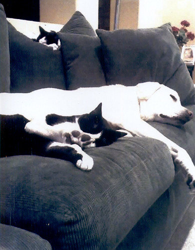 Puppy and kitties on the sofa