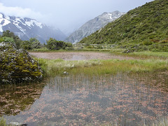 Red Tarns (Daniel Brennwald) Tags: newzealand nationalpark mountcook redtarns