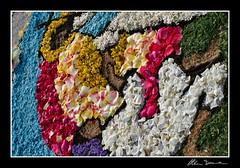 Infiorata Corpus Domini 2008 - Fonte Nuova (Christian Demma) Tags: flowers italy rome canon painting eos for with christian fiori festa corpus 2008 lazio religiosa fontenuova religione domini infiorata 400d canoneos400d demma torlupara christiandemma