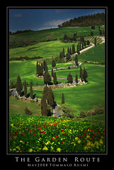 The Garden Route (rusmi) Tags: tuscany poppy poppies cypress toscana papaveri aplusphoto holidaysvacanzeurlaub kissesfromthailand