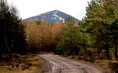 Dirt-track in Forest. (northerntourer) Tags: trees woodland scotland highlands cairngorm invernessshire digitalcameraclub rothiemurchusestate canoneos1000d