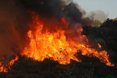 FHR_Fire(124)