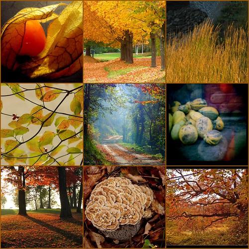 őszi mozaik
