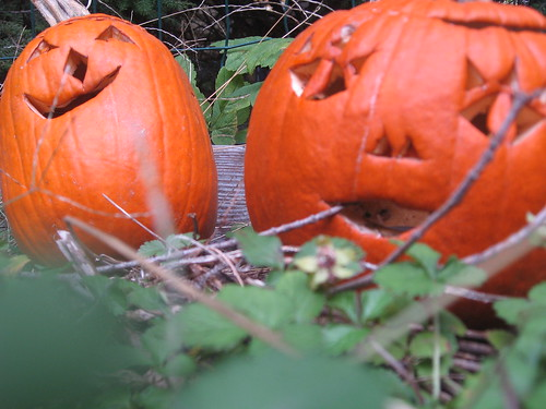 Pumpkins in the Garden