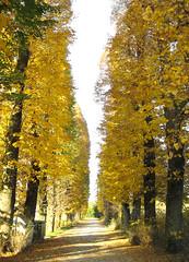 just a driveway... (clickykbd) Tags: travel trees italy color fall canon italia path driveway tuscany clickykbd villa photowalk toscana borgo 2007 lined borgosanlorenzo sd1000 sopahide