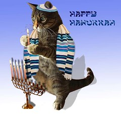Happy Catnukkah (Silvia Maduro) Tags: festival cat gato jew jewish hebrew celebrate hanukkah hannukkah aplusphoto kittychoice colourartaward proudshopper