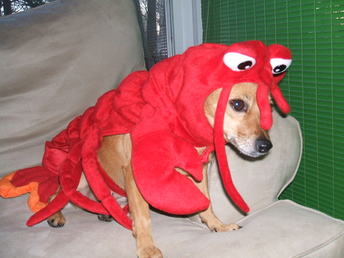 Mina, as lobster
