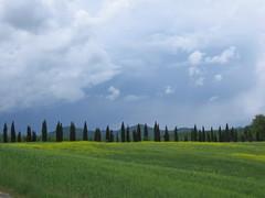san galgano 02 (Antonio_Trogu) Tags: sky italy field clouds landscape italia nuvole cielo tuscany campo toscana cypresses paesaggio sangalgano cipressi antoniotrogu