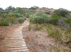 Can You See Me (MsKiKi) Tags: australia kangaroo adelaide southaustralia walkingtrail fpc waitpinga
