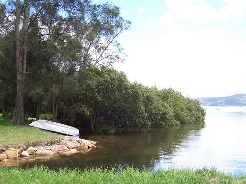 Tinny & mangrove grove Yattalunga foreshore