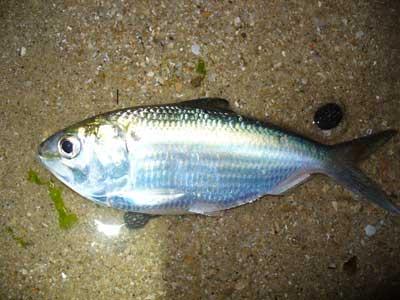 Fish-P1050485