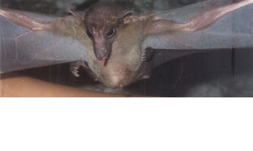 2229971093_f6cbf18fb8 - CRAZY ABOUT BATS! - Science and Research