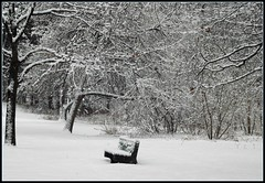 This bench is free (makeupanid) Tags: trees snow toronto colour bench pretty highpark snowy snowstorm really lacy blizzard notbw blogto 080206 wejusthadthundersnow