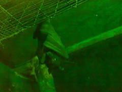 خفاش من تصويري (ماشي ولا معبرني) Tags: خفاش خفـــــاش