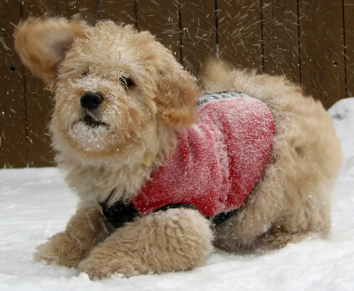 cute puppies playing in snow. Playing in the snow