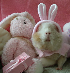 Easter Bunny or Guinea pig  spy? MAKE MINE CHOCOLATE! (dora_marie) Tags: world pet pets oktober bunny bunnies halloween animal animals easter happy guinea pig guineapig cuy cavies cavy costume october sweet konijn conejo guineapigs adorable rosa fudge lovers loveit disguise pigs spy lover february 2008 febrero easterbunny octobre coniglio fvrier trekker konijnen cavie cavia kostuum konijntje instantfave cuys lifebeautiful lmaoanimalphotoaward pet500 platinumheartaward pinkholidayfun theperfectpinkdiamond
