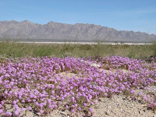 Anza Borego Desert