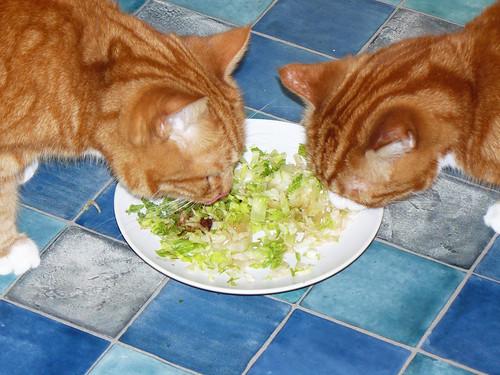 my cats like salad
