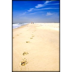 Beach with Pup (sunsurfr) Tags: blue dog beach water clouds sand empty alabama footprints d200 gulfshores ftmorgan nikonstunninggallery