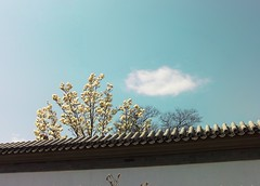 20080327029_res