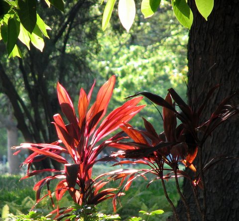 backlit plants IISc