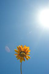 let it shine (CortneyR-) Tags: blue sky orange sun lensflare flare daisy sunflare