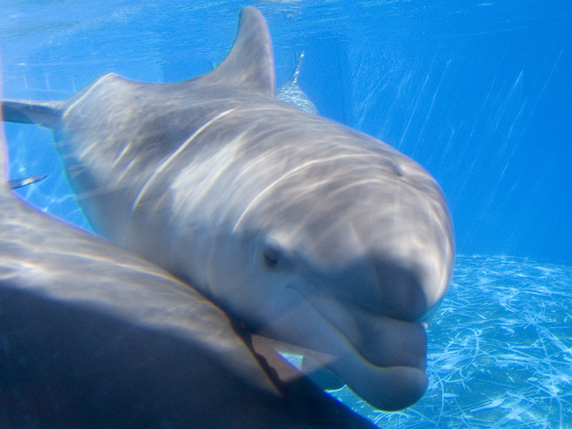 Baby Dolphin at 6 mnths old