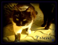 Mi Lolita (aunqtunolosepas) Tags: street pet cats pets cute love animal animals cat inmemory amigo friend missing feline remember lola amiga gatos cutie recuerdo lolita tuxedo gato memory gata felinos felino felines animales forever lovely missyou miss gatita callejero parasiempre aunqtunolosepas