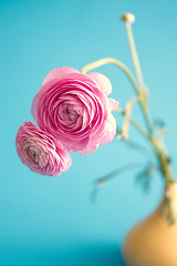 happy together (Sabinche) Tags: pink stilllife flower pastel ranunculus sabinche blueribbonwinner canon2470mmf28l abigfave ultimateshot diamondclassphotographer flickrdiamond