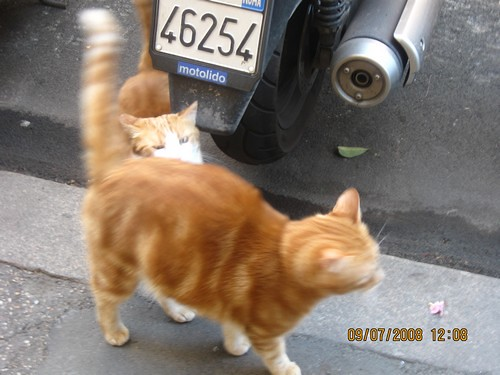 dans gatti