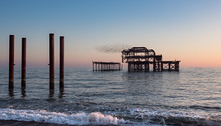 A cloud of starlings cover the West Pier