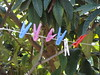 DSC03120 (omirou56) Tags: 43ratio sonydschx9v colors tree χρωματα μανταλακια δεντρο μουσμουλια σκια