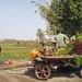 Egypt vegie cart - Egypt Study Abroad