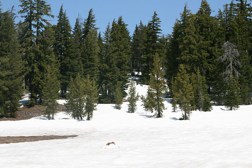 Crater Lake National Park - snowed vista