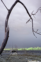 View from the dead tree branch (Infrared) (2121studio) Tags: nature ir nikon surrealism dream nikond50 ali illusion tragedy disaster malaysia infrared jogjakarta indah wonderland kuantan alam mimpi nikonian d90 centraljava malaysianphotographer jateng imagesforsale picturesforsale sleman cangkringan bencana ilusi khayalan convertedinfraredcamera 2121studio kuantanphotographer pahangphotographer ciptaanallahswt malaysianinfraredphotographer 0139342121 kebesaranallah gambaruntukdijual lukisanalam nublee alibinshamsulbahar dusunbronggang indonesiavolcanoaftermath indonesiamountmerapieruptionaftermathpictures kesankesandariletusangunungmerapi