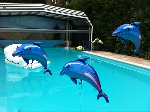 Heliumballonnen Dolfijnen in het Zwembad