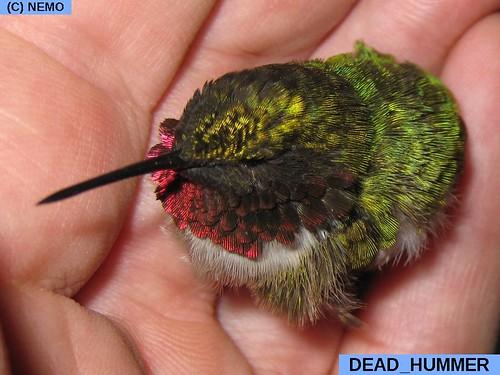 dead_hummer