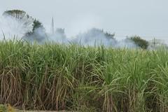 Sugar Cane Excursion (25)